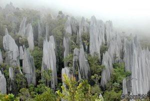 Borneo: Gunung Mulu national park